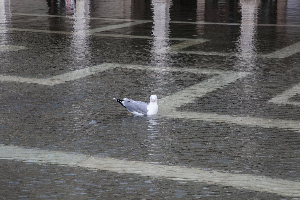 20141118-Venedig-San-Marco-Frueh-039.jpg